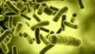 ما أهمية دور البكتيريا النافعة