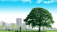 معلومات عن فوائد الشجرة