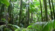 كيف يمكن حماية البيئة