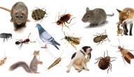 مكافحة الحشرات والآفات دون استخدام المواد الكيميائية