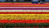 تعبير عن الربيع