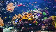 الحياة في أعماق البحار
