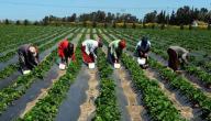 مفهوم الإنتاج الزراعي