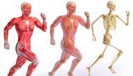مقال علمي عن الجهاز العضلي