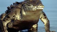 أضخم حيوانات العالم
