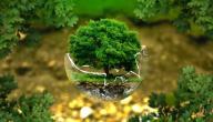 مفهوم البيئة وأنواعها