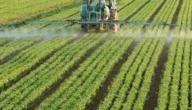 موضوع عن أنواع المزروعات في فلسطين وأماكن زراعتها