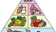 مفهوم الهرم الغذائي