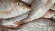 موضوع عن فوائد السمك