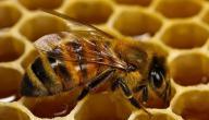 موضوع عن النحل والعسل