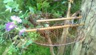 صنع فخ للطيور