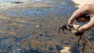 مفهوم التلوث البحري والبري