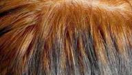 طريقة سحب لون الحناء من الشعر بالزبدة
