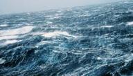 كم عدد البحار