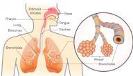 مكونات الجهاز التنفسي عند الإنسان