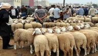 شروط الذبح في عيد الأضحى