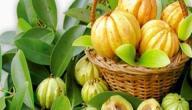 فاكهة جارسينيا كامبوجيا