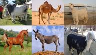 بحث عن الثروة الحيوانية في الوطن العربي