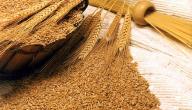 ما هو جنين القمح