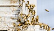 كيف اربي النحل