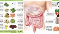كيف نحافظ على سلامة الجهاز الهضمي