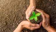 بحث حول حماية البيئة وحقوق الإنسان