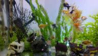 عمل حوض سمك يدوي
