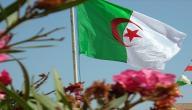 معلومات عن دولة الجزائر