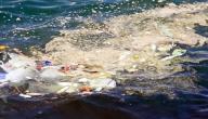 مظاهر تلوث المياه