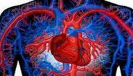 كم تبلغ كمية الدم في جسم الإنسان