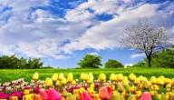 الربيع فصل الجمال والبهجة