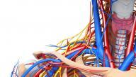 ما هو الجهاز العصبي