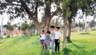 محافظة بني حسن