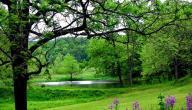 فوائد الغابات وطرق حمايتها