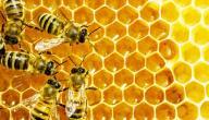 أمراض النحل وطرق علاجها