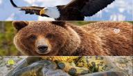 أقوى الحيوانات في العالم