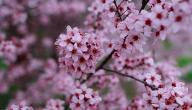 تعبير عن فصل الربيع