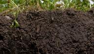 كيف يمكن حماية التربة