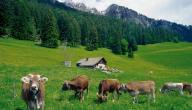 مدينة هايدي لاند في سويسرا