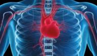 عمل القلب في جسم الإنسان