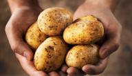 فوائد البطاطا لكمال الأجسام