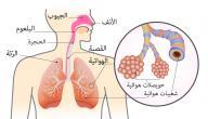 مقال علمي عن جهاز التنفس