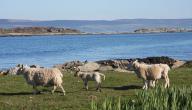جزيرة غاغة