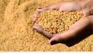 فوائد نخالة القمح للبشرة