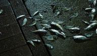كيف يموت السمك