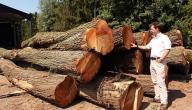 بحث عن أنواع الأخشاب
