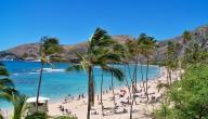 تقرير عن جزر هاواي