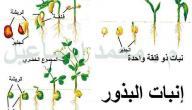 مراحل دورة حياة النبات