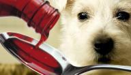 فقدان الشهية عند الكلاب