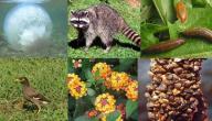 طرق المحافظة على التنوع البيولوجي